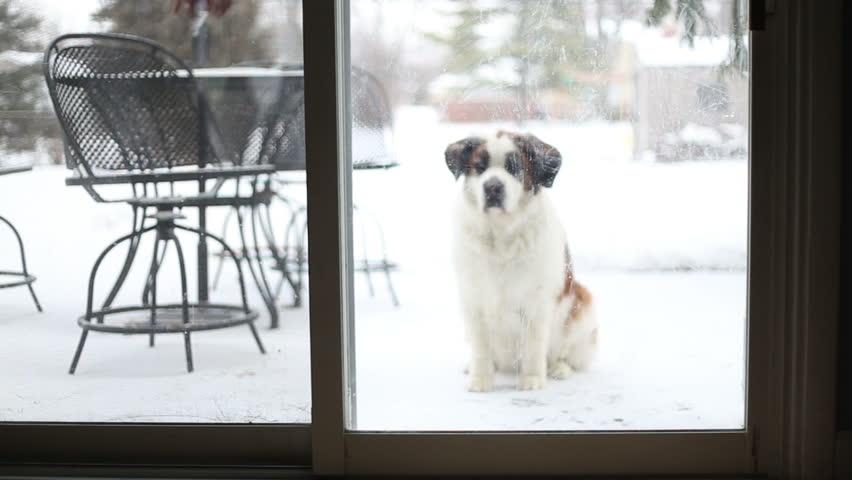 een bewegingssensor in je slimme huis voor je huisdier